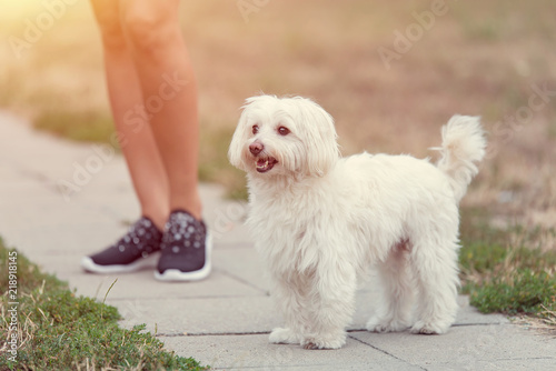 Fotografia, Obraz  Bichon bolognese dog with beautiful in the park