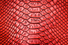 Red Snake Skin Pattern Texture