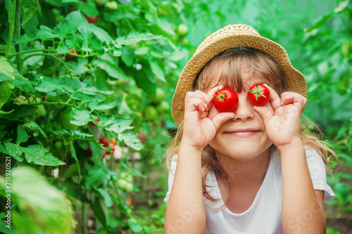 Fotografía child collects a harvest of homemade tomatoes. selective focus.