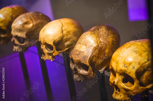 Selective focus, row of skulls without mandible Wallpaper Mural
