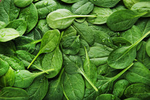 Spinach Leafs Background
