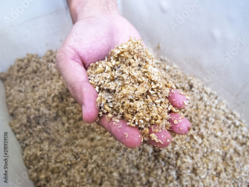 Fotografie, Obraz  Spent Grain in hand : Homebrewing