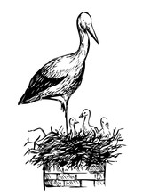 Sketch Of Stork In The Nest. H...