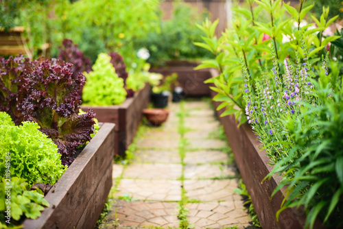 Photo sur Aluminium Jardin Vegetable garden with raised beds, focus on foreground