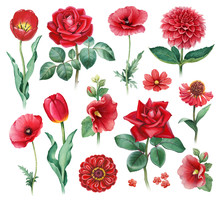 Watercolor Illustrations Of Red Flowers