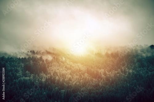 Fotografie, Obraz  Sunny Foggy Forest Landscape