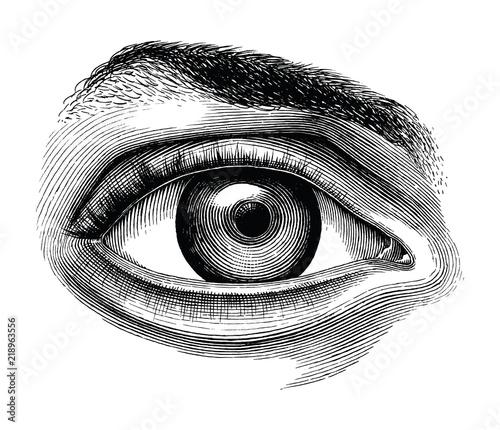 Obraz Anatomy of human eye hand draw vintage clip art isolated on white background - fototapety do salonu