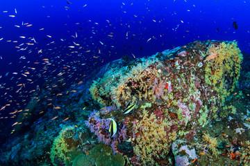 Fototapeta na wymiar Shoals of colorful tropical fish swimming around a beautiful tropical coral reef