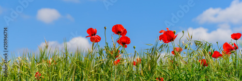 Fotoposter Poppy Sun on poppies in Catalunya with blue sky