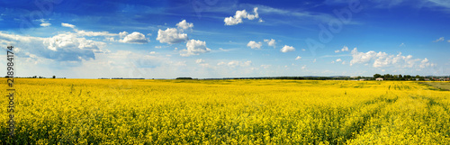 Deurstickers Meloen panoramic view of Rape Field in Ukraine