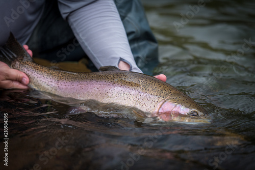 Fotografía Trout Fishing Catch and Release