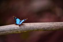 Blue Butterfly Posing On A Stick