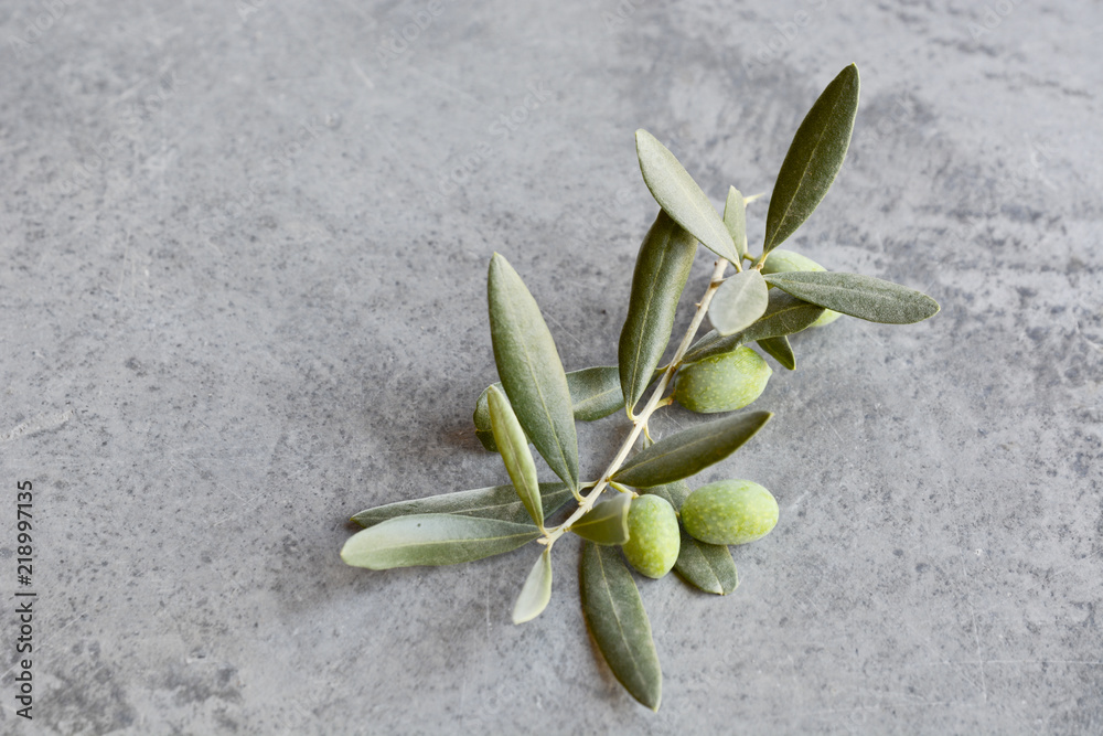 Fototapeta Gałązka oliwna na szarym tle. Oliwki - obraz na płótnie