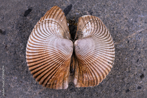 Details on a sea shell.