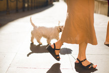 Old Woman In Black Shoes Walking With Her White Dog On The Street