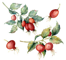 Watercolor Set With Two Branch Of Briar, Red Berries And Green Leaves. Hand Painted Dog Rose And Hips Isolated On White Background. Illustration For Design, Fabric, Print Or Background.