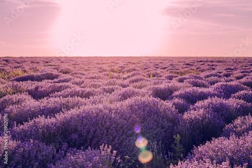 Foto op Aluminium Aubergine lavender
