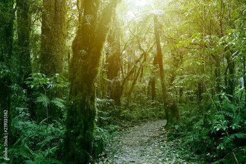 Foto op Canvas Weg in bos Forest walking trail
