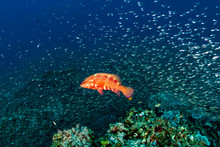 A Brightly Colored Coral Group...