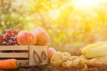 Fall Harvest Cornucopia. Autumn Season With Fruit And Vegetable.