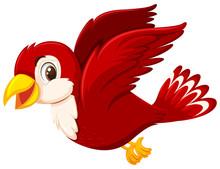 A Cute Red Bird