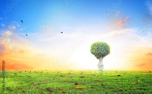 World environment day concept: Silhouette alone tree on beautiful meadow wallpa Canvas Print