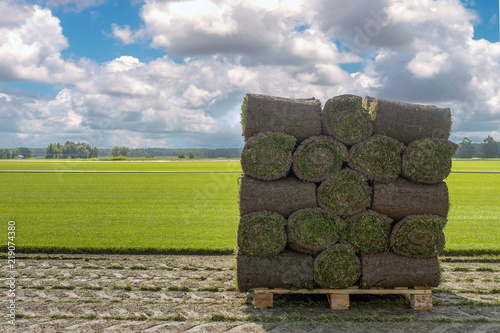 Fotografía The sod on pallets on a turf farm. Rolled lawn, green grass.