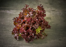 Red Lettuce On Wooden Background