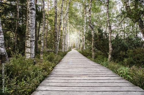 Foto op Canvas Weg in bos Traumhafter Birkenwald im Schwarzwald - Deutschland