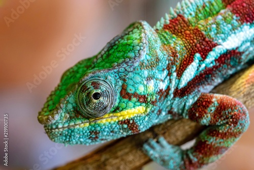 part of a lizard of a chameleon closeup