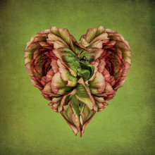 Heart Made Of Flower Petals On Green