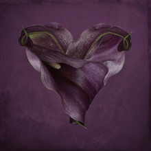 Heart Made Of Two Purple Flowers