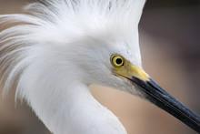 White Bird Close Up