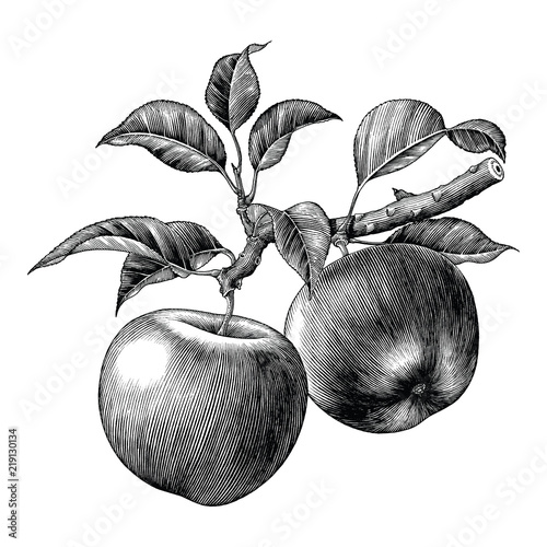 Fotografía Apple branch hand draw vintage clip art isolated on white background