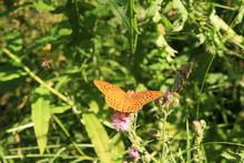 Papillon Sur Sa Fleur