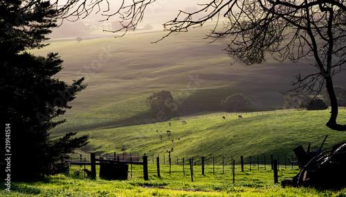 Poster Pistache farming landscape