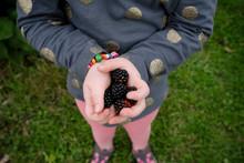 Little Girl's Hands Holding Freshly Picked Blackberries
