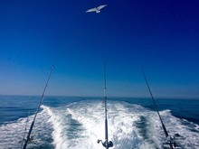 Ocean Fishing Summer Day On Th...