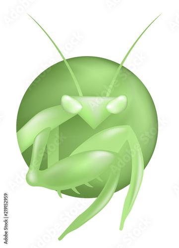 Photo creative mantis illutration