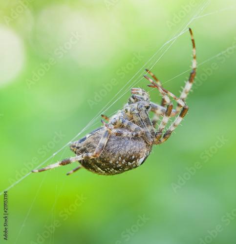spider on spider web