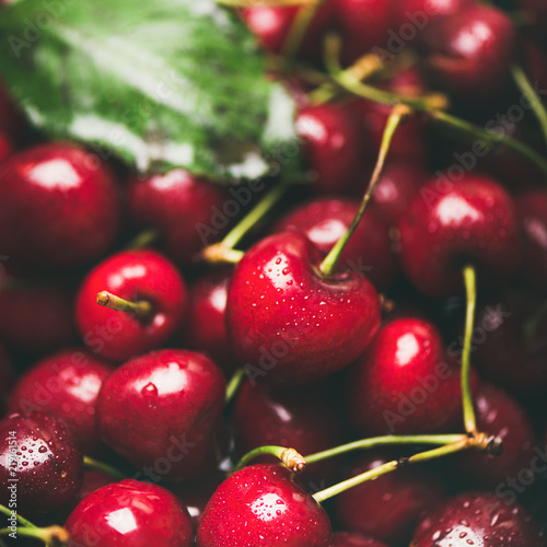 Fresh sweet cherry texture, wallpaper and background. Wet sweet cherries, selective focus, square crop. Summer food or local market produce concept