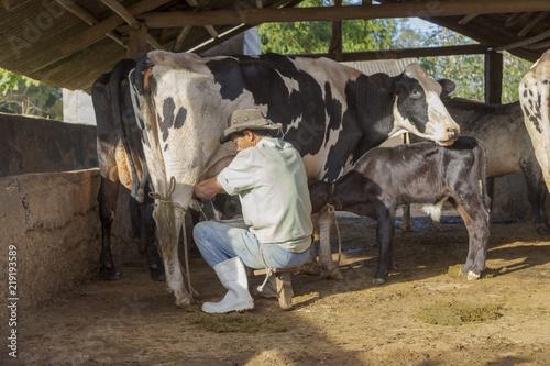 Fotografiet  Ordenha leiteira manual em pequena propriedade rural de Guarani, estado de Minas