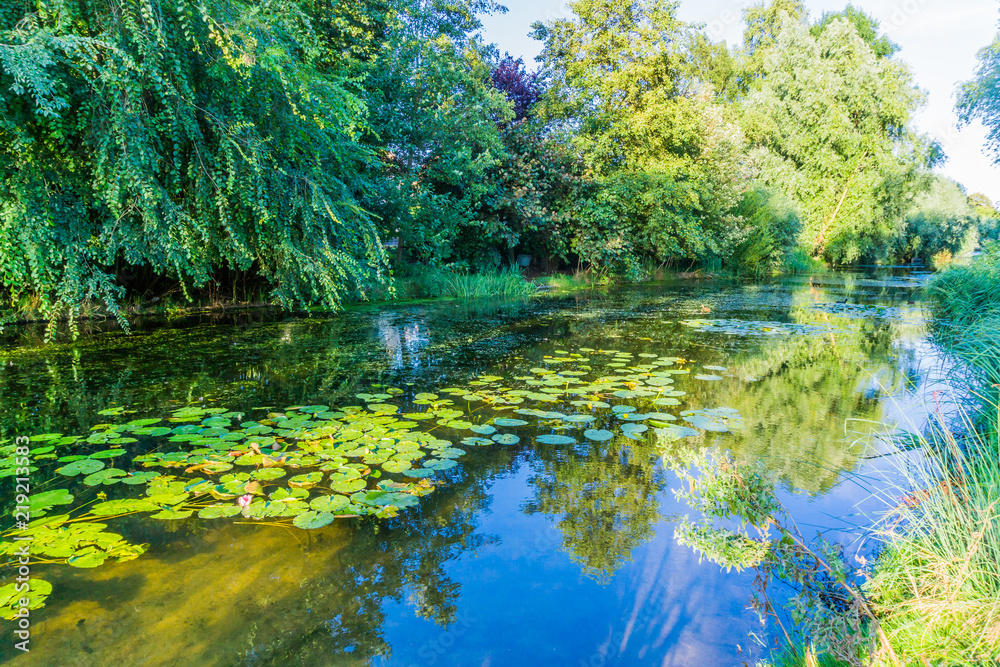 Fototapety, obrazy: river pond landscape with reflecting water and water lilly's
