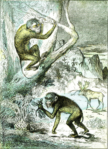 The leaf monkeys in the Miocene period, vintage engraving. Canvas Print