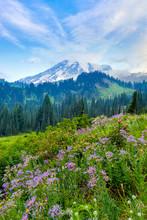 Mt Rainier And Wildflowers