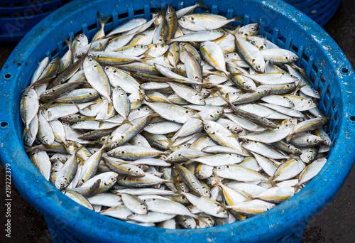 Fotografija  Yellow-stripe scad fish.