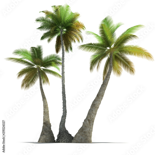 Staande foto Palm boom 3D rendering of three palm trees on a neutral white background