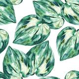 Akwarela egzotyczny wzór, zielone liście tropikalne, ręcznie rysowane ilustracja dłoni lato - 219230969