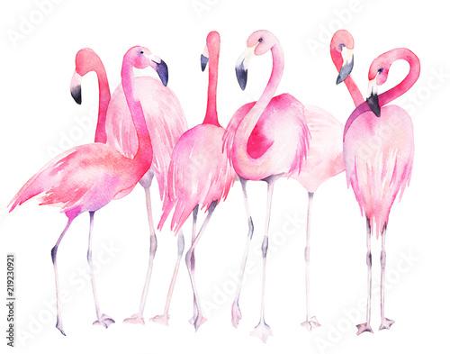 Photo sur Plexiglas Watercolor flamingos. Hand drawn summer illustration