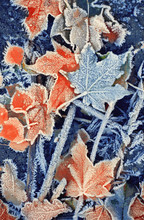 Background Of Autumn Leaves In...